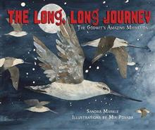 The Long, Long Journey: The Godwit's Amazing Migration