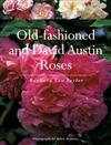 Old Fashioned and David Austin Roses