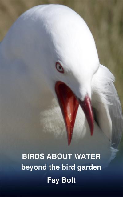 Birds about Water: Beyond the Bird Garden