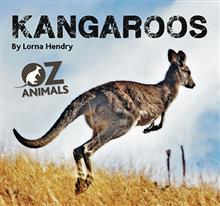 Kangaroos Oz Animals